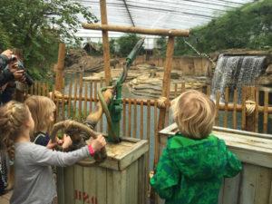 Arrangement dierentuin Emmen